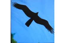 utc_panel_16_-_vulture.jpg