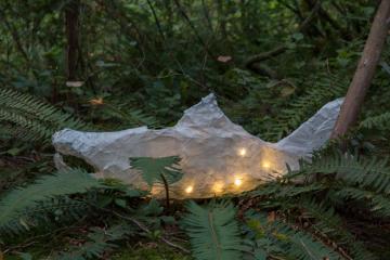 Salmon lantern floating on a fern