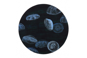 Moon Jellies