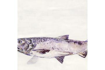 Portrait of a River - Salmon