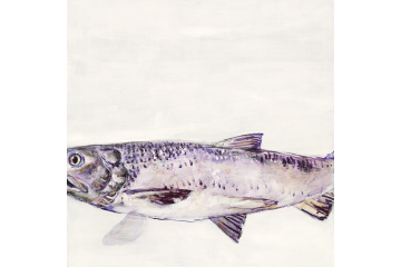 Portrait of a River - Salmon