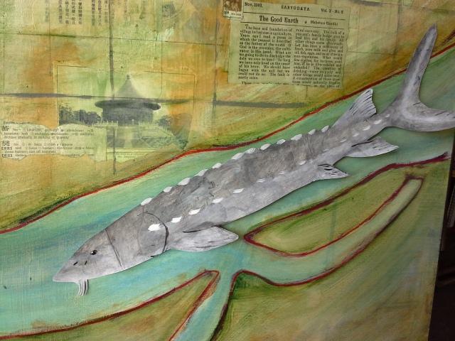 Fraser River sturgeon
